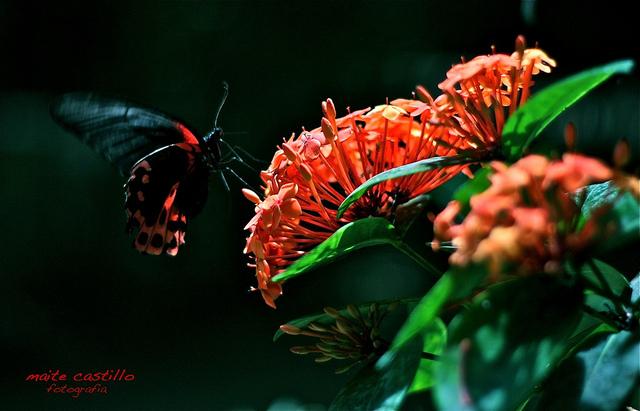 El efecto mariposa, libro del proyecto #a1000manos
