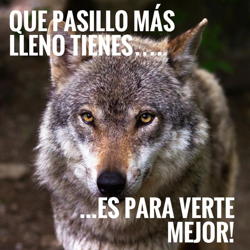 pasillo lobo